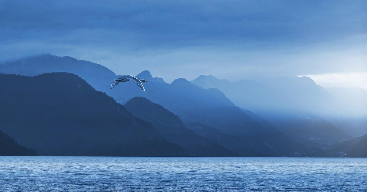 A goose flies over a body of water with mountains in the background, and very blue.